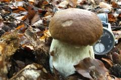 half-watch-mushroom